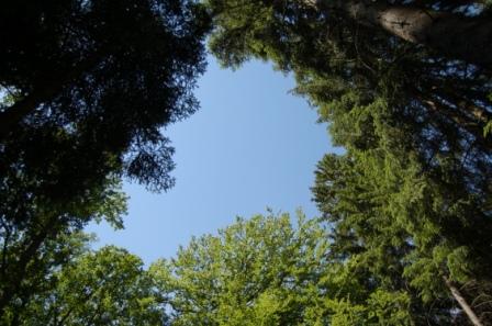 Urwald-Baumkronen